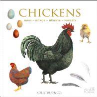 Chickens - kvadratiske kort