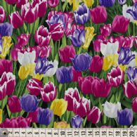 Kulørte tulipaner