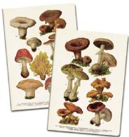 Notesbøger med svampe